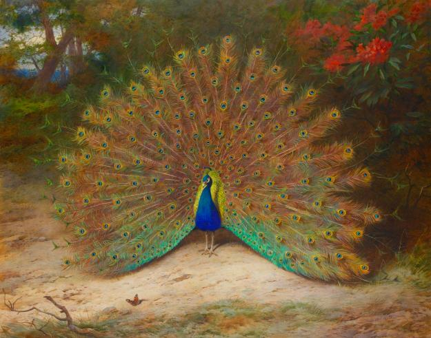 archibald-thorburn-peacock-and-peacock-butterfly