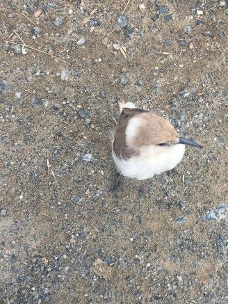 IMG_194 Kailash bird